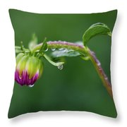 Bud With Drops Throw Pillow