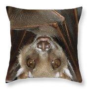 Buettikofers Epauletted Bat Epomops Throw Pillow