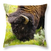 Buffalo Grazing Throw Pillow