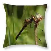 Bug Eyed Dragon Fly Throw Pillow