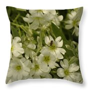 Bug On White Blooms Throw Pillow