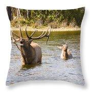 Bugling Bull Elk And Calf Colorado Rut 5 Throw Pillow