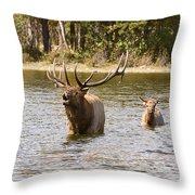 Bugling Bull Elk And Calf Colorado Rut  Throw Pillow