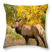 Bull Elk Autum Portrait Throw Pillow