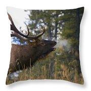 Bull Elk Bugling Jasper National Park Throw Pillow by Carson Ganci