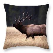 Bull Elk Cervus Elaphus Throw Pillow
