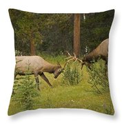 Bull Elk Fighting, Banff National Park Throw Pillow by Philippe Widling