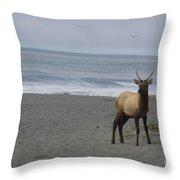 Bull Elk On Calfornia Coast Throw Pillow