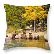 Bull Elk Watching Over Herd 2 Throw Pillow