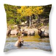 Bull Elk Watching Over Herd 4 Throw Pillow