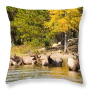 Bull Elk Watching Over Herd 5 Throw Pillow
