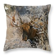 Bull In The Snow Throw Pillow