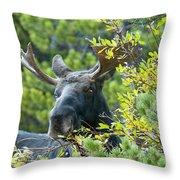 Bull Moose At Dusk Throw Pillow