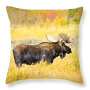 Bull Moose In Autumn Throw Pillow