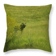 Bull Moose On The Loose  Throw Pillow