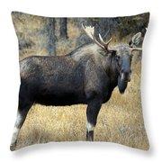 Bull Moose, Peter Lougheed Provincial Throw Pillow