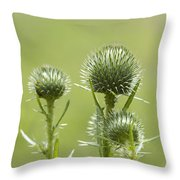 Bull Or Spear Thistle Buds- Cirsium Vulgare Throw Pillow