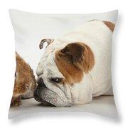 Bulldog And Lionhead-cross Rabbit Throw Pillow