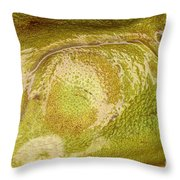 Bullfrog Ear Throw Pillow by Ted Kinsman