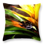 Bumble Bee Dart Frogs Throw Pillow