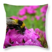 Bumble Bee Searching The Pink Flower Throw Pillow