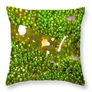Bumblebee Shrimp On Adhesive Anemone Throw Pillow