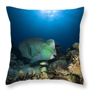 Bumphead Parrotfish, Australia Throw Pillow