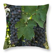 Bunches Of Sangiovese Grapes Hang Throw Pillow
