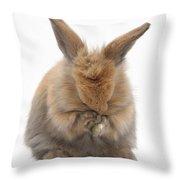 Bunny Grooming Throw Pillow