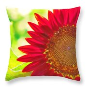 Burgundy Sunflower Throw Pillow