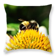 Busy Bee Collecting On Echinacea Pow Wow Throw Pillow