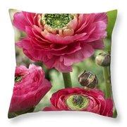 Buttercup Ranunculus Sp Mirabelle Vert Throw Pillow