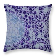 Buttercup Root Section Throw Pillow