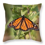 Butterfly - Monarch - Resting Throw Pillow