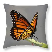 Butterfly - Sitting On The Green Throw Pillow