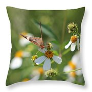 Butterfly 16 Throw Pillow