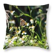 Butterfly 17 Throw Pillow