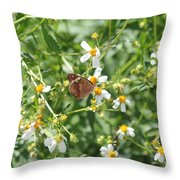 Butterfly 31 Throw Pillow