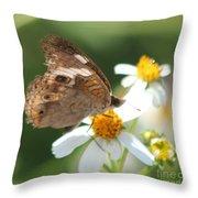 Butterfly 39 Throw Pillow