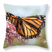 Butterfly Beauty - Monarch IIi Throw Pillow