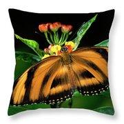 Butterfly Dryadula Heliconius Feeding Throw Pillow