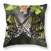Butterfly Duo Throw Pillow
