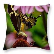Butterfly Heaven Throw Pillow