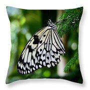 Butterfly II Throw Pillow