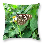 Butterfly In The Wild Throw Pillow