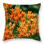 Butterfly Milkweed Throw Pillow