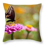 Butterfly On Pink Zinnia Throw Pillow