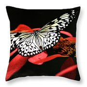 Butterfly On Red Throw Pillow
