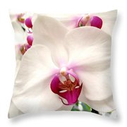 Butterfly Orchids Closeup Throw Pillow