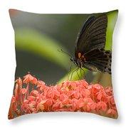 Butterfly Papilio Memnon Feeding Throw Pillow